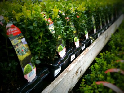 Day 24 – Winter stocks at the nursery