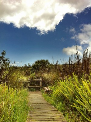 Day 113 – Ferns and fynbos