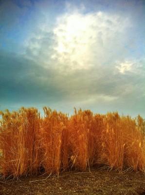 Day 194 – Schaumberg sky