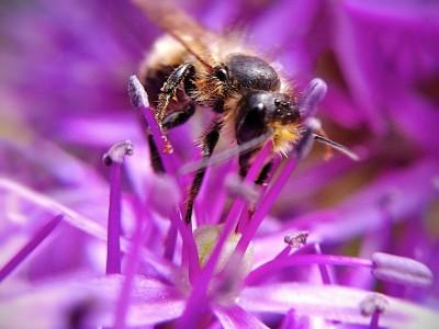Day 245 – Nectar miner