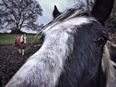 Day 48.2 – Morning, horses
