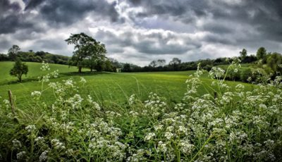 Day 220.2 – Greener pastures