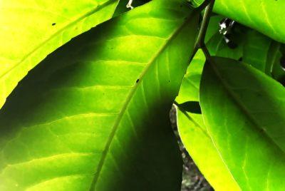 Day 329.2 – Under leaf
