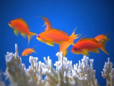 Day 18 – Aquatic Dissonance