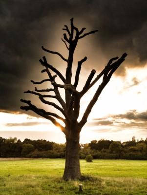 Day 50 – Not a Joshua Tree
