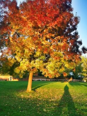 Day 40 – Autumn blaze