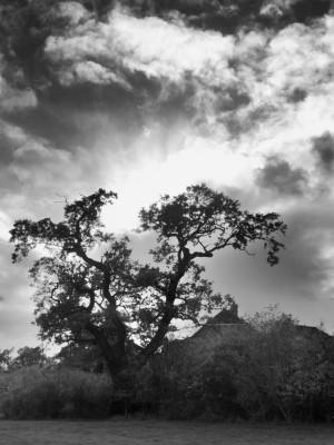 Day 65 – Epsom skies