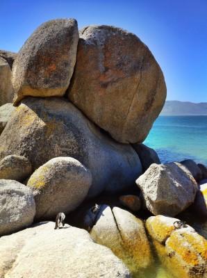 Day 126 – Boulders, penguins