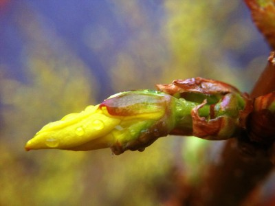 Day 173 – First bud