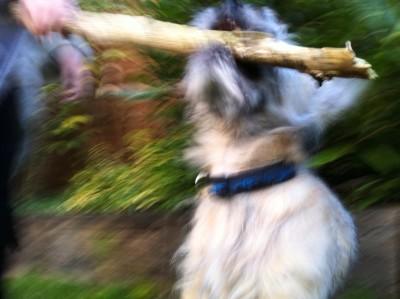 Day 192 – My stick