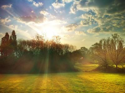 Day 229 – Spring morning