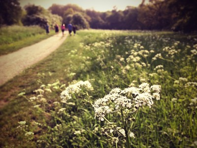 Day 234 – Sunday stroll