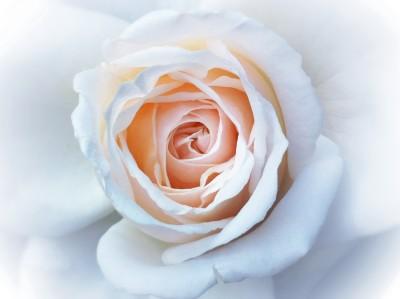 Day 248 – Soft petals