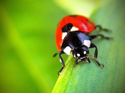 Day 253 – Ladybird