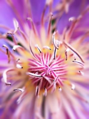 Day 255 – Pollen sparklers