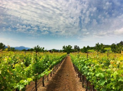Day 270 – Darioush Vineyards