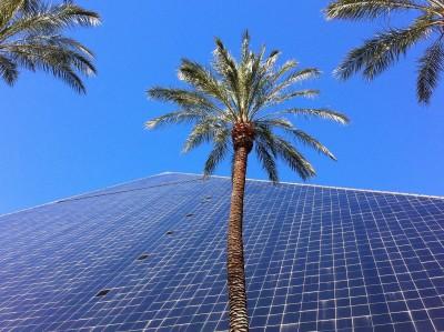 Day 275 – Blue palms