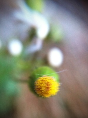 Day 340 – Weeds in a breeze