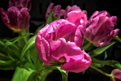 Day 93.2 – Pink petals