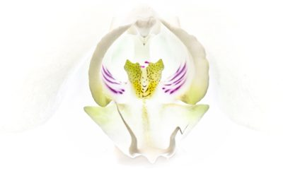 Day 7.3 – Orchid