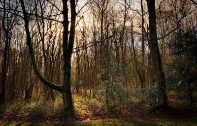 Day 81.3 – Woodland