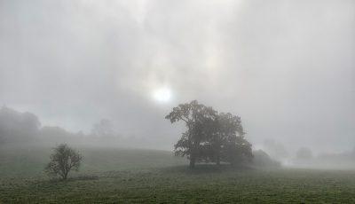 Day 316.3 – Misty